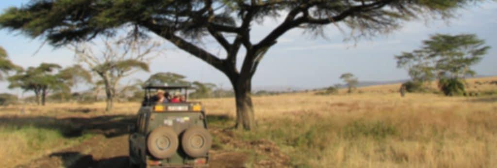 safaribg